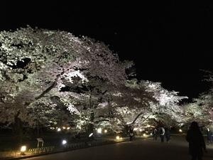 3夜桜.jpg